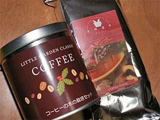 珈琲の木、栽培セット